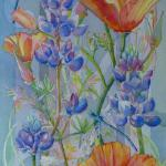 """Poppies and Lupine"" (watercolor) by Jeannie Vodden"